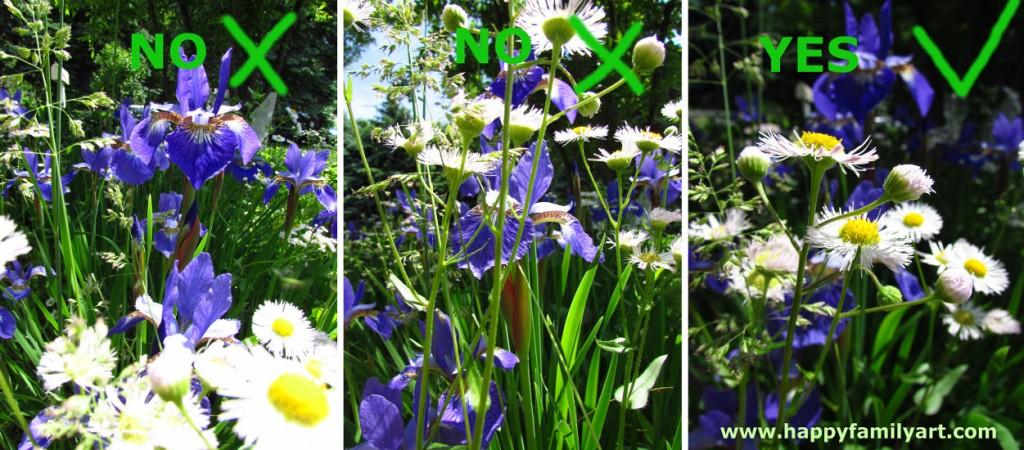 Get super helpful macro photography tips here!